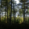 Les forestiers français face aux défis de la forêt française