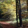 Décret approbant le Programme National Forêt Bois
