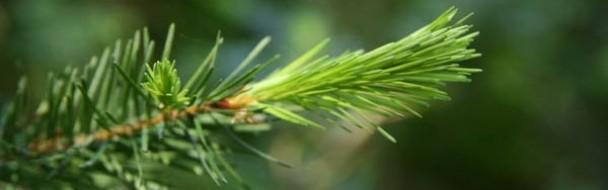 Le Mémento de la forêt et du bois 2013