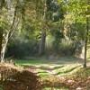 Consultation du public sur le projet de Programme national de la forêt et du bois