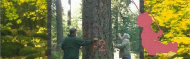 3ème Fête de la Forêt