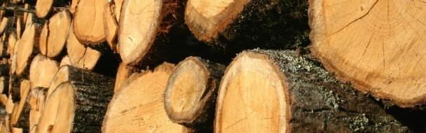 Chantiers forestiers et sylvicoles : l'inspection du travail sur le terrain !