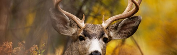Dérogation confinement pour régulation de la faune sauvage