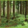 Plan d'action interministériel  et contrat de filière forêt-bois 2018-2020