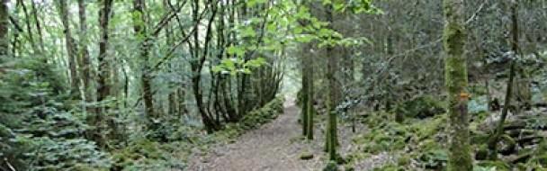 Recommandation pour une récolte durable de biomasse forestière pour l'énergie