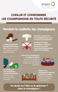champignon 1