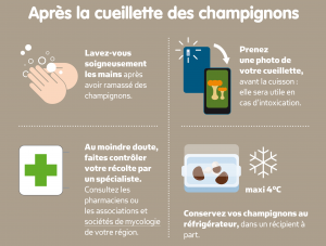 champignon 2